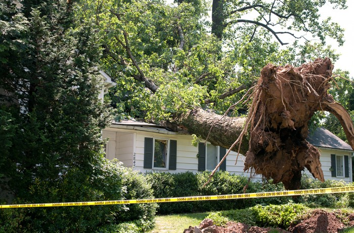 tree removal knoxville tn